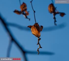 GALERIE_Nature_©2015_studio2000|wf_MG_0034