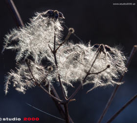 GALERIE_Nature_©2015_studio2000|wf_MG_9987